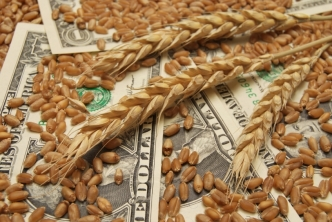 Wheat and dollar banknote in close up